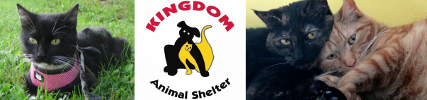 Animal Cruelty - Kingdom Animal Shelter